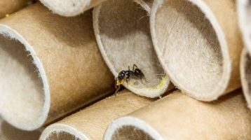 What to do about Sugar Ants